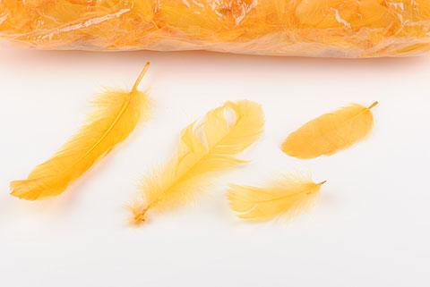plume orange