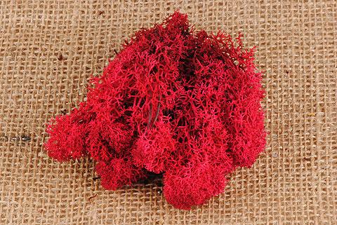 mousse d' islande rouge
