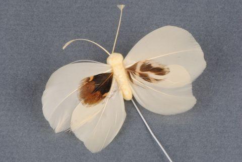 papillon ivoire