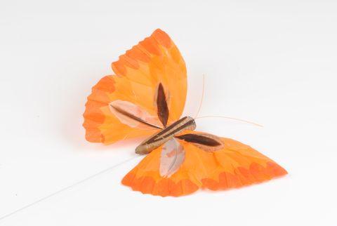 papillon 18 cm