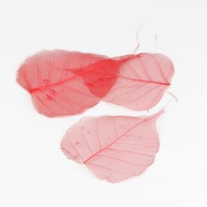 feuille squelette rouge