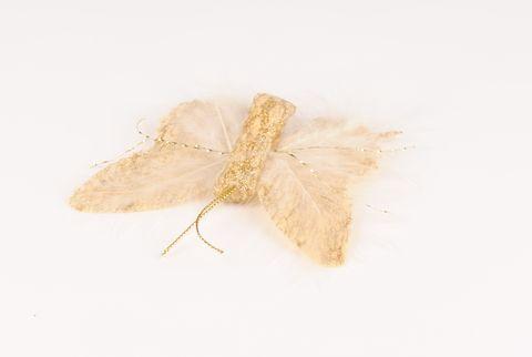 papillon or