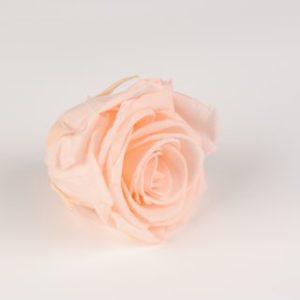 rose eternelle saumon