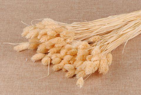 pho phalaris blanchi