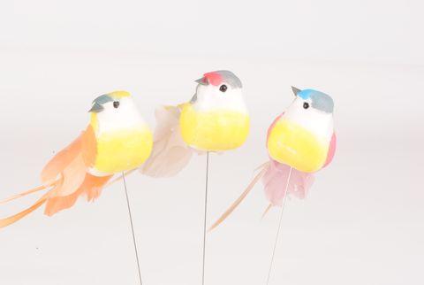oiseau decoratif